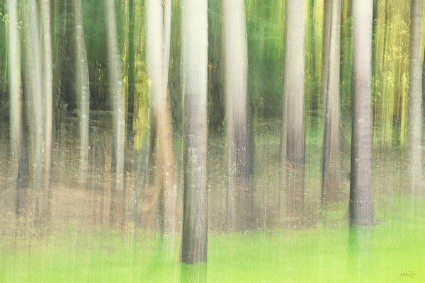 August 8 - Ha! I can practice Vertical Blur in my own backyard...  #CY365 - Intentional Blur/Pan