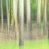 August 8 - Ha! I can practice Vertical Blur in my own backyard...<br /> <br /> #CY365 - Intentional Blur/Pan