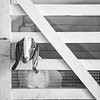 August 21 - A day at the North Idaho State Fair...<br /> <br /> #CY365 - Shapes/Black & White<br /> Kootenai County Fairgrounds<br /> Coeur d'Alene, ID