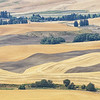 August 17 - Shades of Grain...<br /> <br /> #CY365 - Prompt Free<br /> Steptoe Butte<br /> Steptoe, WA