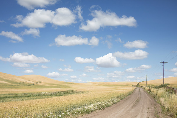 July 20 - O beautiful for spacious skies<br /> For amber waves of grain...<br /> <br /> #CY365 - Prompt Free<br /> Palouse, WA