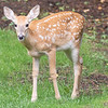 August 22 - Bambi came to visit...<br /> <br /> #CY365 - Gentle