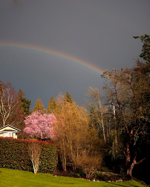 24 Feb 2010: If you see a rainbow and have your camera you have to take a picture....