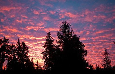 31 Dec 2012: Spectacular sunrise this morning.