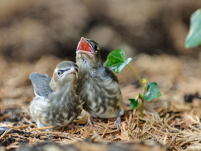 7 Sep 2014: Another of the baby birds.