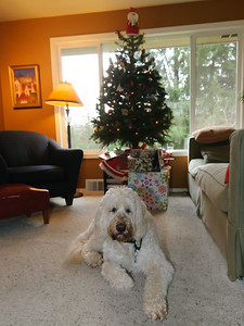 30 Dec 2014: Christmas shot of Archie