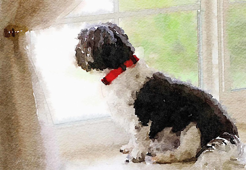 September 16 - Waterlogue Wednesday - Patiently Waiting...