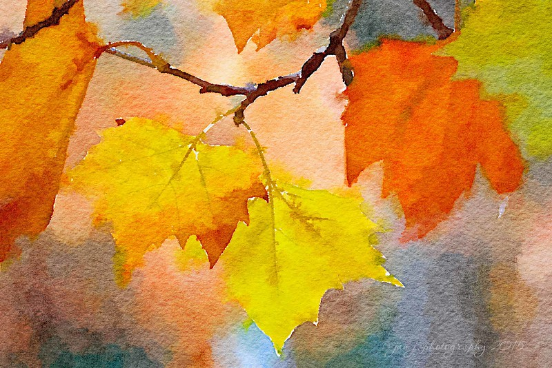 October 21 - Waterlogue Wednesday...A little taste of Fall