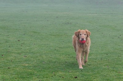7 Jan 2015: Dog in the fog