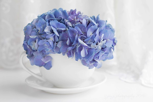 May 5 - I love blue flowers...<br /> <br /> #SotDreamyPhotography