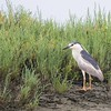 June 3 - An early morning walk through the Bolsa Chica Wetlands...