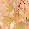 October 23 - So long beautiful leaves of Portland...<br /> <br /> Portland Japanese Garden<br /> Portland, OR