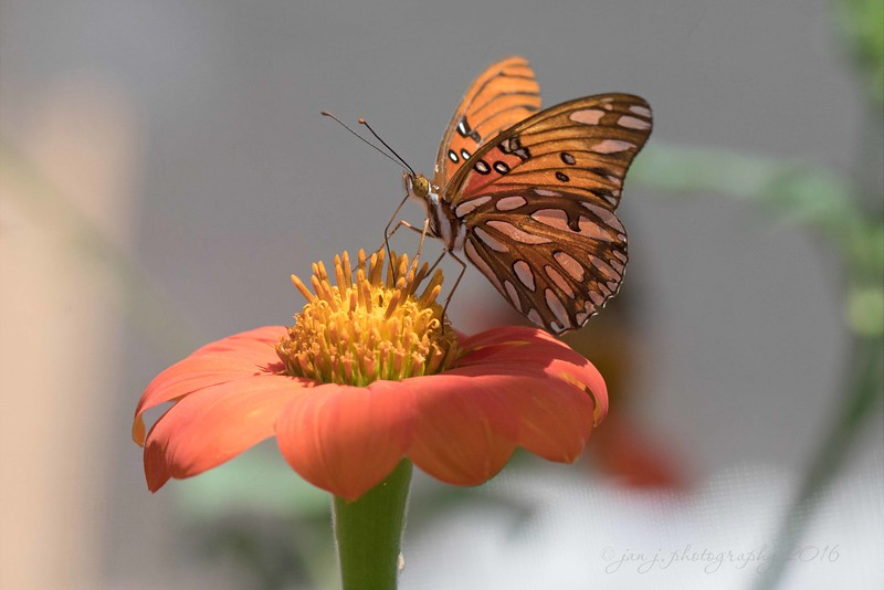 July 12 - A fun morning at Butterfly Farms...  #CY365 - Nature Butterfly Farms, Vista, CA