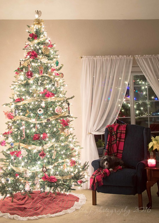 December 5 - Oh, there's no place like home for the holidays...  #CY365 - Twinkle #Capture the Holidays - Capture the Tree