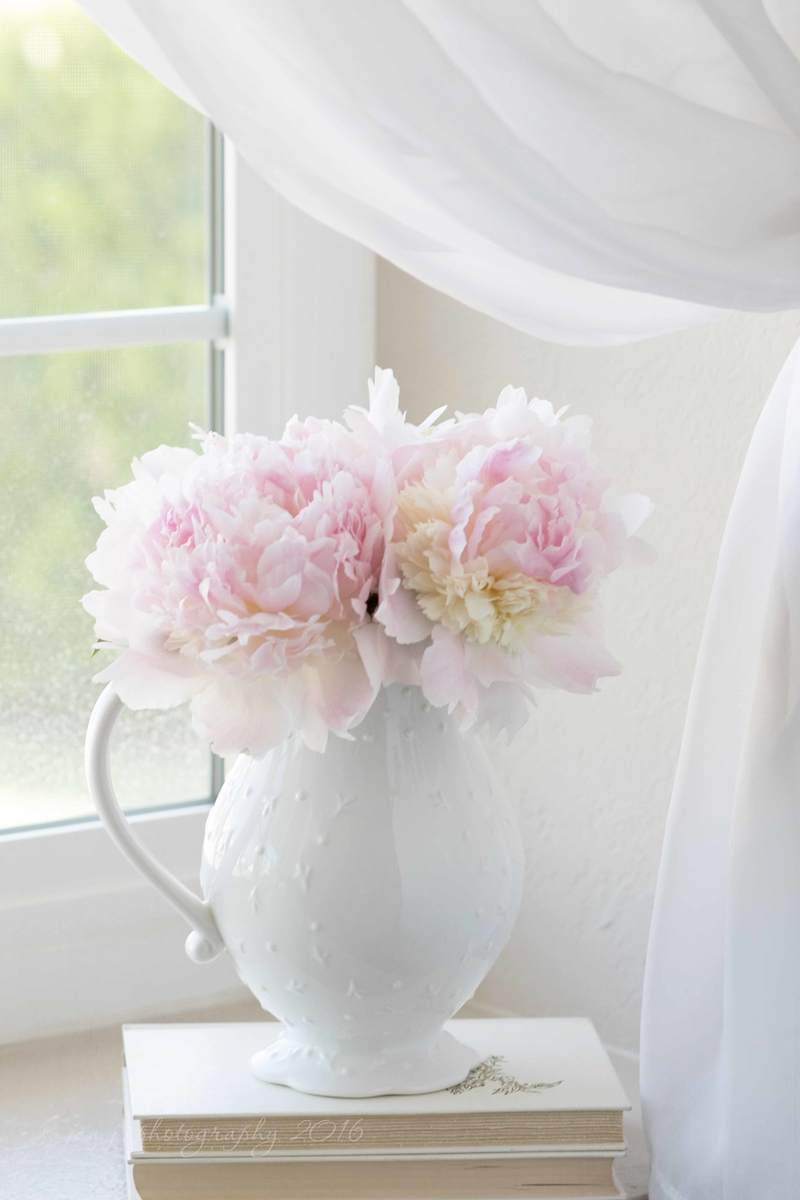 May 11 - Lovin' those Peonies!  I don't know if I could live without flowers...  #CY365 - Can't Live Without #SoftDreamyPhotography