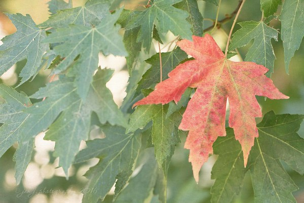 October 2 - One leaf at a time...