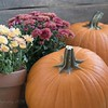 October 9 - Lovin' all the pumpkins...<br /> <br /> #CY365 - Pumpkin/Orange