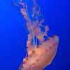 August 6 - A fun day celebrating at the Monterey Bay Aquarium...<br /> <br /> Monterey, CA