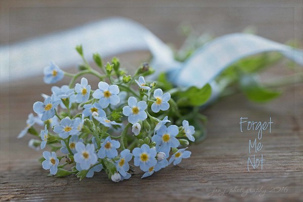 August 17 - Today I learned that Forget-Me-Nots wilt REALLY quickly after they've been cut...  #CY365 - Fragrant (though they weren't really)