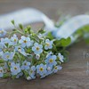 August 17 - Today I learned that Forget-Me-Nots wilt REALLY quickly after they've been cut...<br /> <br /> #CY365 - Fragrant (though they weren't really)
