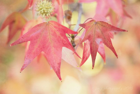November 29 - Savoring these last few days of fall colors...