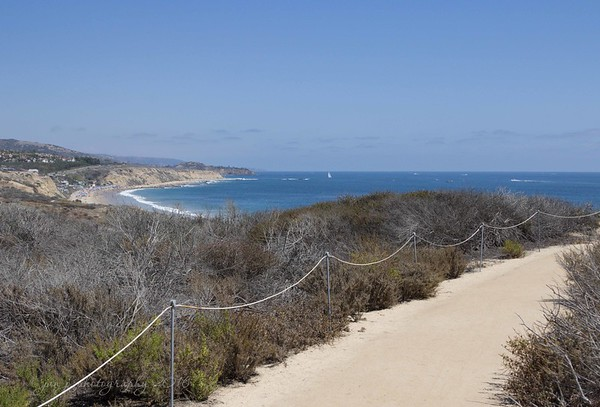 July 17 - Along our Sunday afternoon stroll...  #CY365 - Dynamic Crystal Cove State Park, Laguna Beach CA