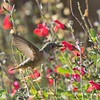 November 22 - Back for more Hummer practice...<br /> <br /> Mission San Juan Capistrano