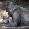 November 3 - A mother, is a mother, is a mother...<br /> <br /> San Diego Safari Park