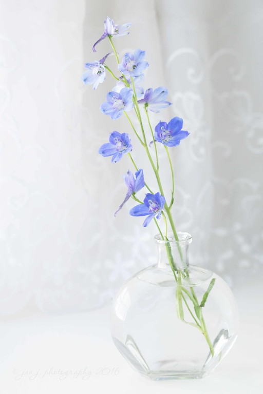 July 30 - Just a touch of blue...  #soft dreamy photography