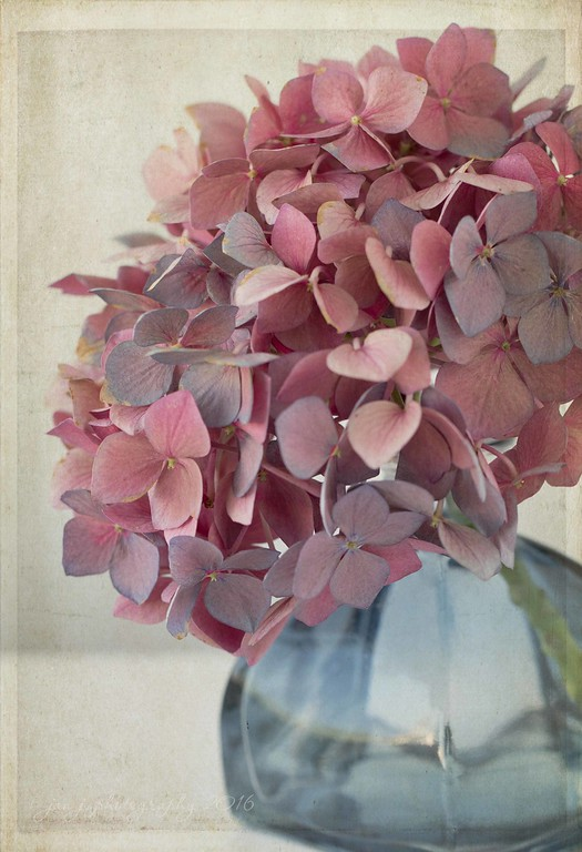 August 3 - Dried Hydrangea, Day 4--Varigated...