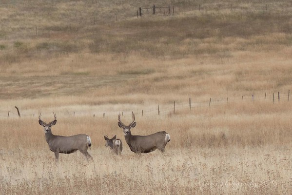 September 12 - Today we headed home.  Everyday of our trip we saw deer on the side of the road (antelope & moose too)...that's not going to happen here in the OC.<br /> <br /> Bozeman, MT