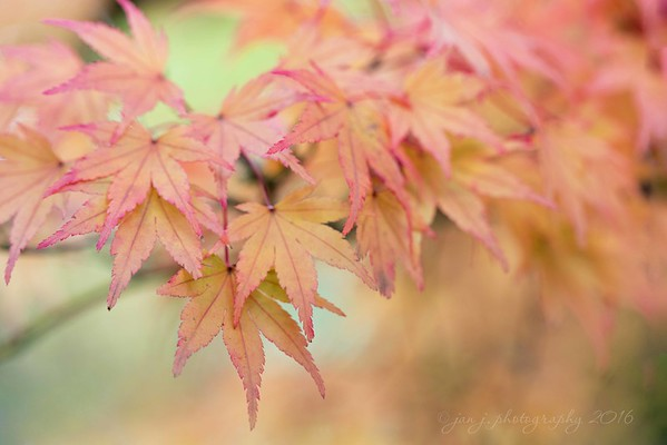 November 2 - The colors of Autumn...