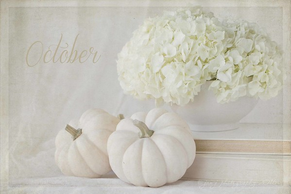October 3 - I made myself wait until October to begin with the pumpkins...  #inawhitebowl #softdreamyphotography