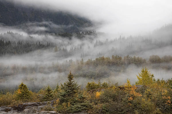 September 25 - The last of the fog series...  #CY365 - Details Mendenhall Valley Juneau, AK