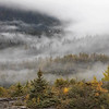September 25 - The last of the fog series...<br /> <br /> #CY365 - Details<br /> Mendenhall Valley<br /> Juneau, AK