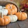 October 16 - Practicing with my Lensbaby Velvet 56 today...<br /> <br /> #CY365 - Pumpkin/Decoration