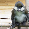 September 5 - There's room for one more...<br /> <br /> #CY365 - One Thing<br /> San Diego Zoo<br /> 9/2018