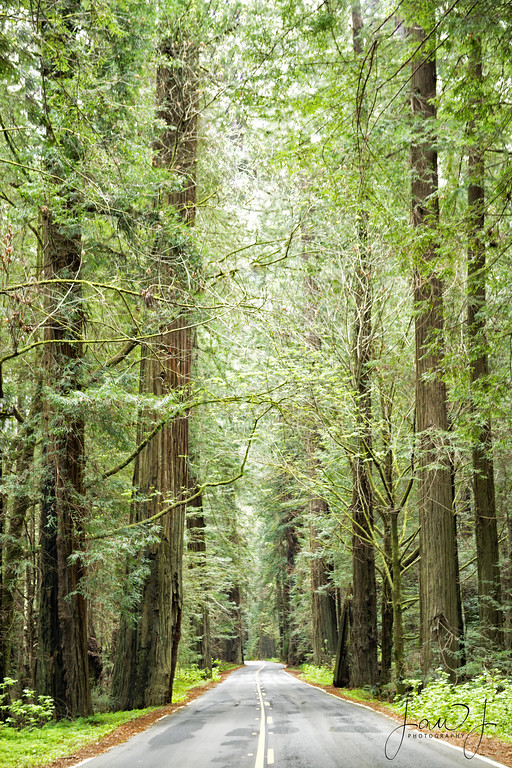 """March 29 - Avenue of the Giants...I think these Redwood trees have been here since """"In the beginning""""  #CY365 - Low Light Avenue of the Giants Humble Redwoods State Park"""