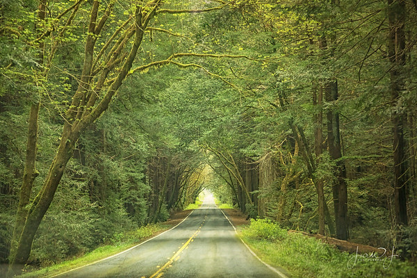 April 2 - I seem to be on a kick of paths lately...<br /> <br /> #CY365 - Leafy/Foliage/Green<br /> Avenue of the Giants<br /> Humbolt Redwoods State Park<br /> Orick, CA