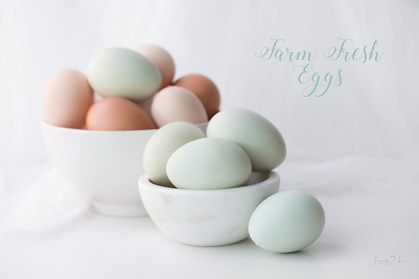 August 9 - Blue Eggs on White. My daughter hand-carried a dozen eggs from her chickens in her carry on when she flew in to visit because she knew I've wanted to photograph blue eggs but couldn't find any locally. How sweet is that!<br /> <br /> #CY365 - Overexposed/Bright