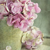 July 27 - Our hot temps are drying out all my Hydrangea...<br /> <br /> #CY365 - Bits & Pieces