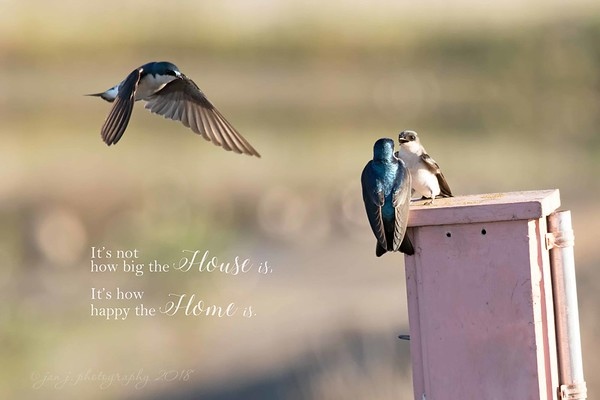 February 1 - House Hunting is for the birds...<br /> <br /> #CY365 - Balancing Act/Patience<br /> San Joaquin Wildlife Reserve<br /> Irvine, CA