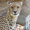 November 5 - Not a big fan of Mondays I'm guessing...<br /> <br /> San Diego Safari Park