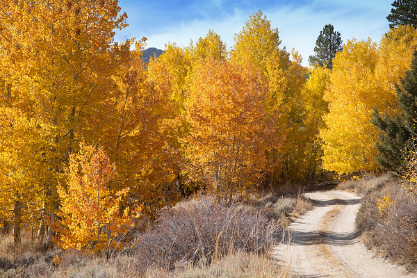 November 10 - No leisurely strolls today, just 9 long hours of driving in the car...  #CY365 - Landscape View