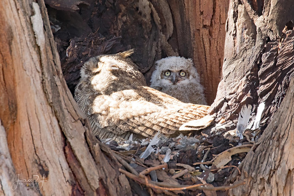 April 12 - Whoo are you looking at???  #CY365 - Off Prompt Olivas Adobe Oxnard, CA