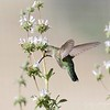 February 19 - A breezy, brisk day (well, brisk for us), made this more challenging than usual...<br /> <br /> #CY365 - Take off<br /> San Joaquin Wildlife Reserve<br /> Irvine, CA