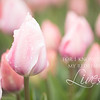 April 1 - ...and I will stand with Him on that day.<br /> <br /> #CY365 - Green<br /> Woodburn Tulip Festival<br /> Woodburn, OR