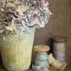 February 22 - I was in a still-life mood today...<br /> <br /> #CY365 - Off Prompt
