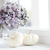 September 30 - I don't usually photograph pumpkins until October...but today's prompt just called for white pumpkins.<br /> <br /> #CY365 - White Balance/Temperature