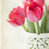 January 22 - This Dutch girl always loves her tulips...<br /> <br /> #365PictureToday - Uplift<br /> Color Week - Red
